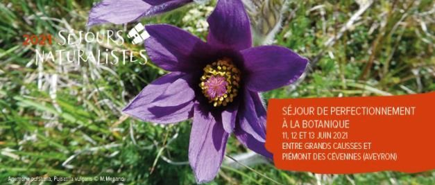 "Botanical workshop with ""Nature in Occitanie"" from 11 to 13 June 2021 at the cottage"